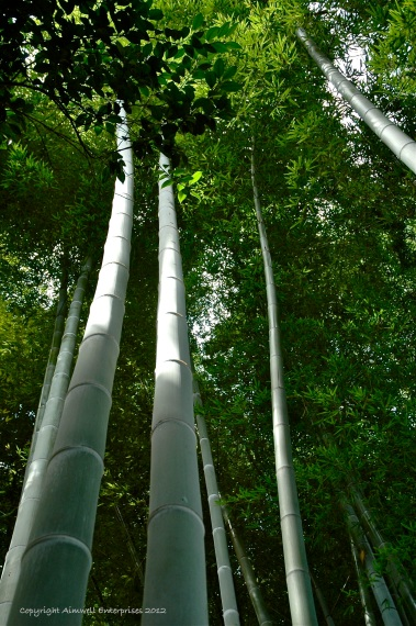 Bamboo, Japan