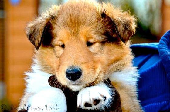 ... Puppies bring joy ...