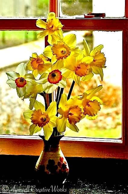 Irish Daffodils
