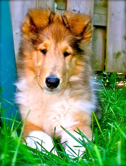 Abbey Puppy