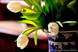 Tulip Triumverate