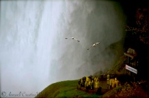Seagulls and tourists enjoy a moment under Horseshoe Falls, Niagara, Canada
