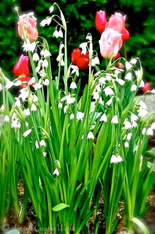 Although I was never there in the spring I imagine granny's garden was resplendent with tulips and lilies of the valley.
