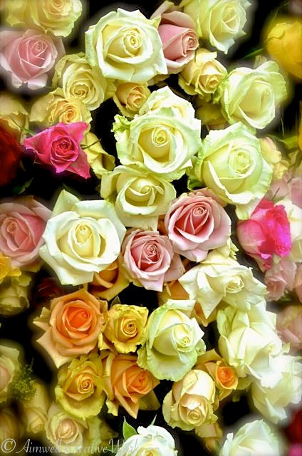 A Gift of Roses