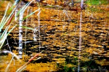 On golden pond ...