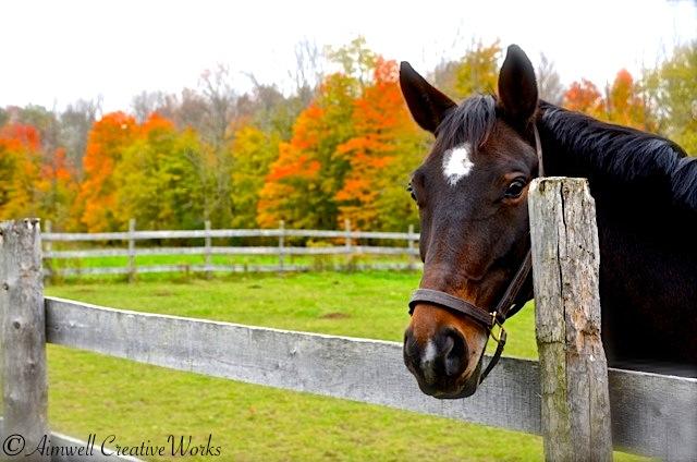 Horse habit