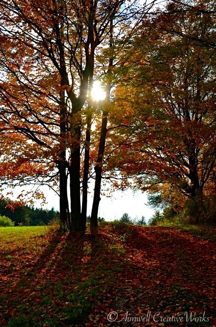 Maple Sunshine