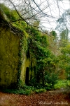 Abandoned house near Ashford Castle, Co. Mayo, Ireland