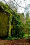 Abandoned house near Ashford Castle, Co. Mayo, Ireland