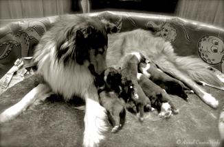 Healthy Puppies