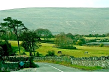 Pastoral Ireland