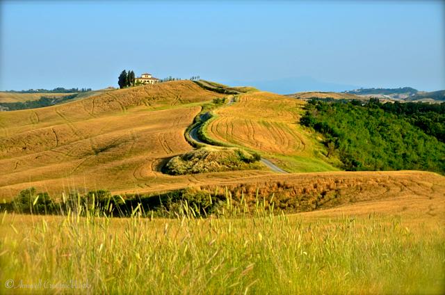 Tuscan Heaven