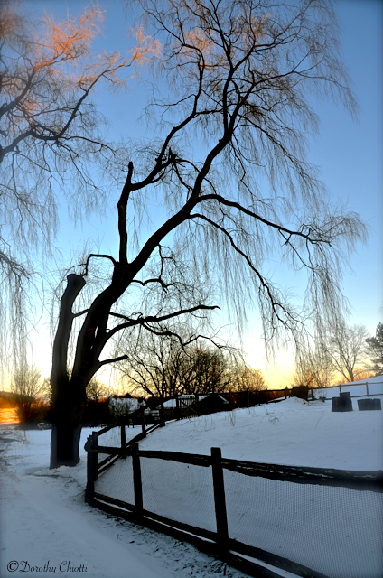 Winter's Willow