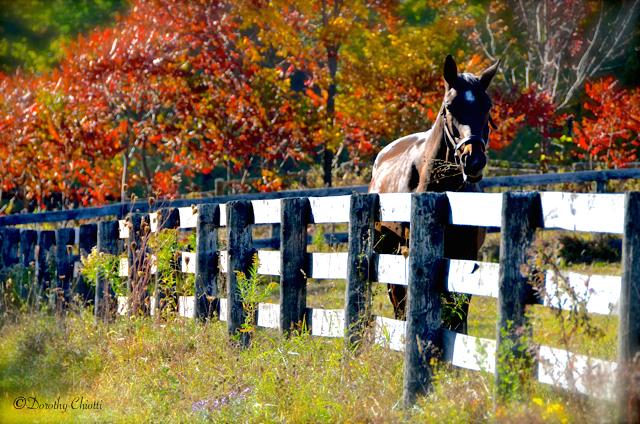 Fence Sitting