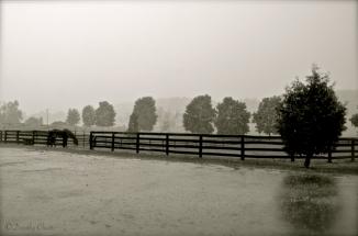 Rare rain