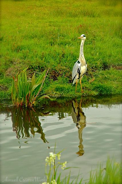 Mirrored Heron