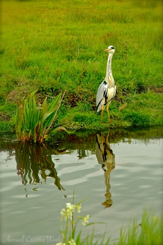 Mirrored Heron
