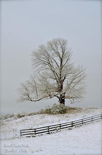 Favoured Tree
