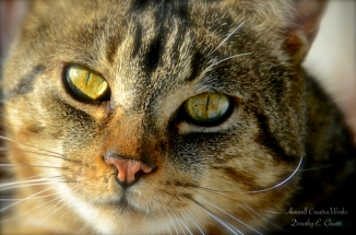 cat's eyes lr
