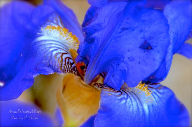 Iris LR