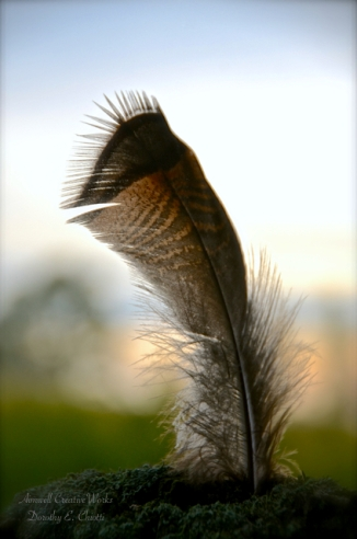 The strength of a feather