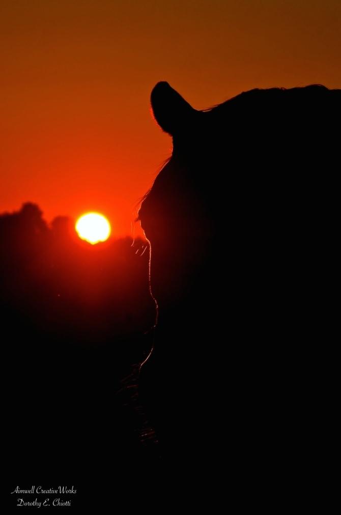 Solstice Sunrise 1200 WM